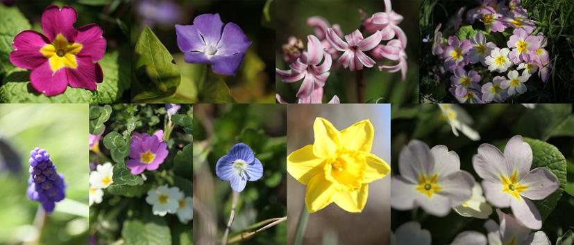 Lou Pataclet en fleurs
