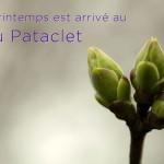Bourgeon cerisier